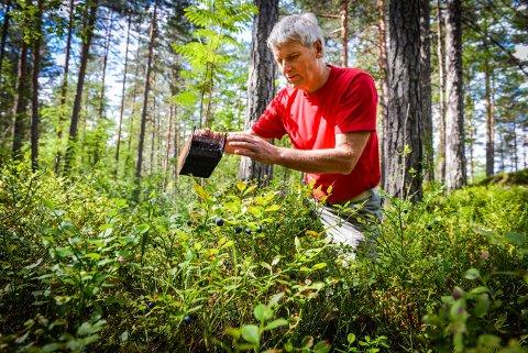 Øyvind Stranna Larsen på blåbærtur for noen år siden. – Vi har veldig mange bra bær i Norge som kan høstes.  Her tenker jeg blant annet på blåbær, multer, bringbær, tyttebær og krekling, sier han.