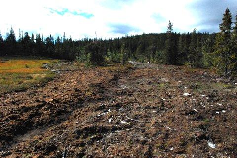 Skaper bråk: Naturvernforbundet i Buskerud har hatt sin egen befaring på den omstridte skiløypa på Vegglifjell. De mener at skiløypa har fått helt andre dimensjoner enn omsøkt.