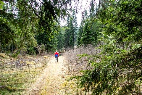 Nordmenn som satser på skogsferie i sommer, kan nå leie seg inn på Statskogs utleiehytter. Illustrasjonsfoto: Gorm Kallestad / NTB scanpix