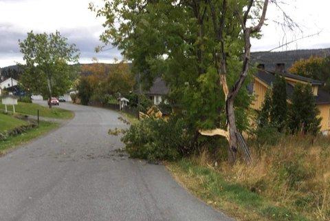 TRØBBEL: Dette treet fikk problemer i den kraftige vinden.