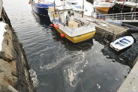 Fiskeslo: Slik så det ut i havnebassenget i Svolvær forleden, etter leverdumping i østre havn i Svolvær. Foto: Knut Johansen