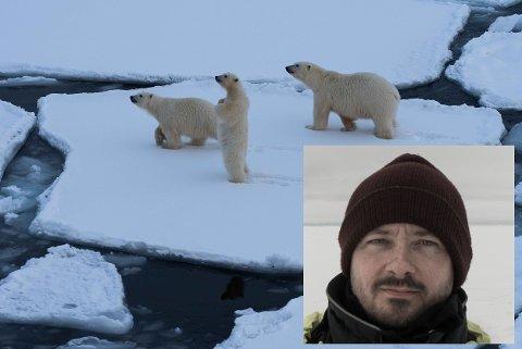 Som matros i arktiske strøk treffer Andreas Wolden fort på isbjørn.