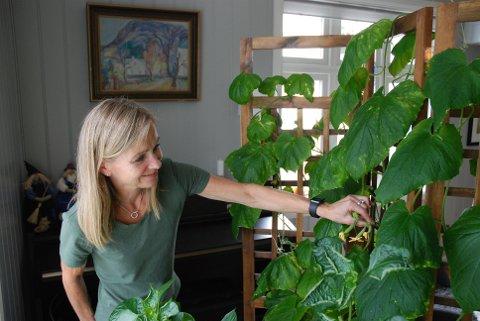 STØRRE ENN FORVENTET: Heime i stua har Trine Ingebrigtsen måttet lage mer plass til plantene sine. I utgangspunktet hadde hun tenkt at de skulle stå i vinduskarmen hele sommeren, men de har nå blitt over to meter høye.