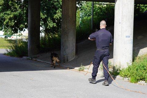 Her leter politiets hundepatrulje etter et av våpnene gjerningsmannen ved Skøyenåsen skal ha brukt.
