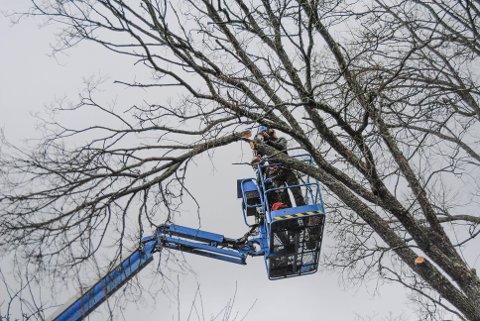 Trær, hekker og buskas er en gjenganger hos konfliktrådet, der trær er i en særstilling. Bildet er tatt i forbindelse med en annen sak.
