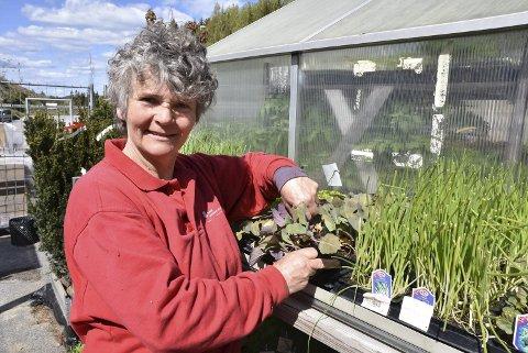 POPULÆRE VEKSTER: I år har rabarbraen fått sin renessanse, og det er mange som satser på urter og grønnsaker i hagen. Her ser Ragnhild Solås Rustad over noen unge kålplanter.