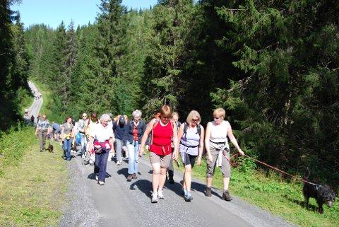 Er Krokskogen det fineste friluftsområdet i Hole? Her fra vandretater i Krokskogen.