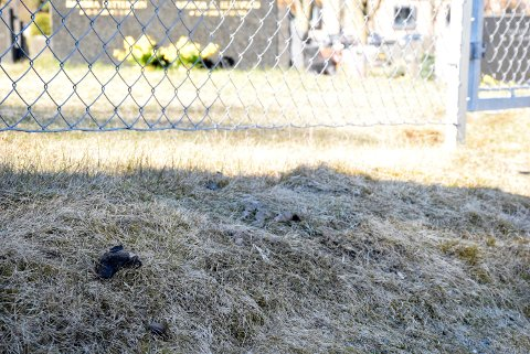 PLUKK OPP: Hundesykdommen gjør det veldig viktig å plukke opp bæsjen etter hundene, minner Gunn Eidsgård om.