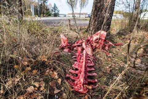 AVFALL: Restene av det som trolig har vært en elg ligger like ved parkeringen og starten på mosjonsløypa på Risesletta.