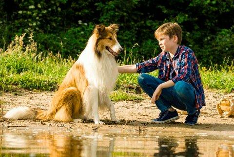 """NY VERSJON AV LASSIE: """"Lassie kommer hjem"""" har nå visninger på Rjukan kino."""