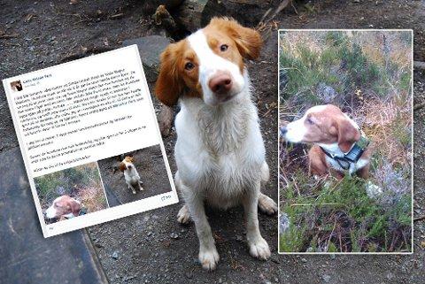 DREPT: Disse to hundene ble mandag avlivet av en grunneier på Bogafjell da de angrep sauer i området for tredje gang.
