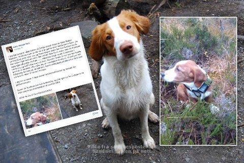 DREPT: Disse to hundene ble i juni avlivet av en grunneier på Bogafjell da de angrep sauer i området for tredje gang.