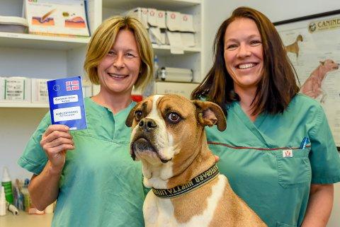 Jeanette Svendsen og Camilla Sæther er dyrleger på Trøgstad Dyreklinikk. De sier det er viktig med hundepass når våre firbeinte venner skal på utenlandstur.