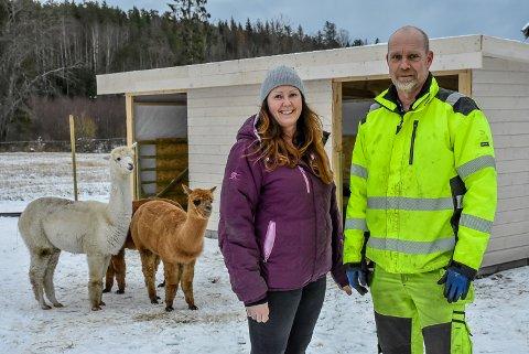 Marianne Ilgutubråten og Ivar Ilgutubråten har nettopp fått seg fire alpakkaer.