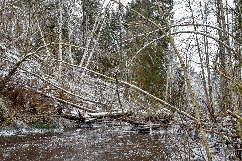 Trær ligger fortsatt i Hobølelva etter et ras i 2019.