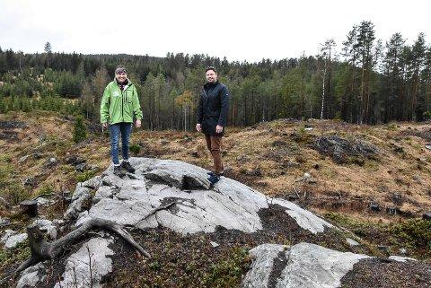 HOGST: Del av området hvor Telemark Ring er tenkt bygget er allerede hogd ut. Notodden arbeiderpartis Gry Fuglestveit og Ole Morten Erichsrud er helt uenig med Mdg om utviklingen av området.
