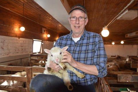 BONDE: Det er bonde Ola T. Heggem er, og da det han selv beskriver som en husdyrbonde. Han sier han ikke er en handyman, men dyrene har han alltid vært glad og interessert i.