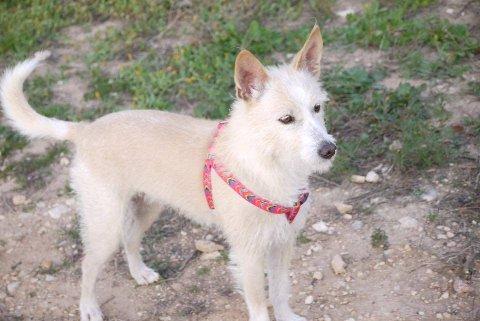 ROSE: Hunden Rose fikk nye eiere etter å ha tilbrakt noe tid på redningssenteret.