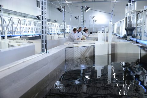 SKAL VOKSE: En etablering av verdens største settefisk på land nærmer seg en etablering.