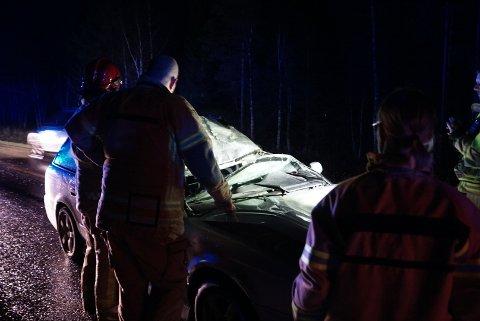 STORE MATERIELLE SKADER: Elgen døde og bilen fikk hard medfart etter kollisjonen.