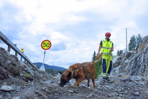Den belgiske fårehunden Asti, og hundefører Andreas Nilsen arbeidet seg raskt og effektivt gjennom området som skulle undersøkes ved E16 i Valdres.