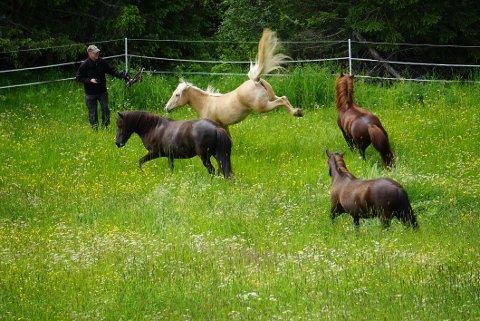 FRESKE FRASPARK: Rosse Blondie sa tydelig fra hvis en av de andre hestene kom for nær. Og det var atskillige vrinsk og høye spark, før Månevind og Engelis Mia fant tonen.