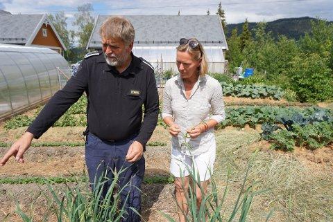 SUNN MAT: Anders Nordrum viser Marit Nythun Utheim rundt i hvitløksfårene som han har i sin egen kjøkkenhage i Lobygda.