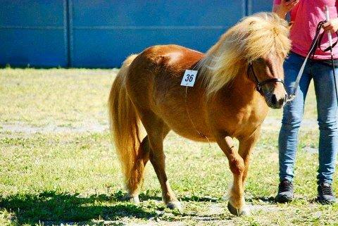 Harmony: Ponnyeier Heidi Johanne Havnås savner ponnien sin. Nå har hun vært borte i snart en måned.