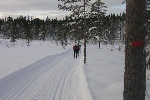FULLT I LØYPENE: I år går Holmenkollmarsjen på Romeriksåsen. Skiforeningen vil på den ene siden gjerne ha tilskuere, men på den annen side advarer de folk mot å gå i løypene mens deltagerne passerer.