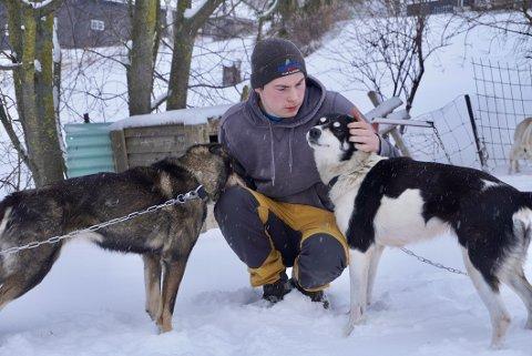 ANGREPET AV ELG: Jonas Roos (18) og hundespannet ble angrepet av elg. Han var sikker på at han kom til å miste minst en av hundene under angrepet. Dina og Cokos kom heldigvis unna.