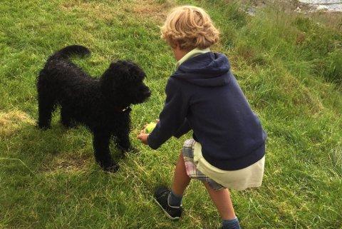 FARLIG SMITTE: Selv den søteste hund kan ha med seg farlige parasitter fra utlandet. (FOTO: Newswire)