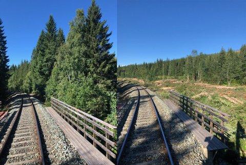 FØR OG ETTER: Skogen står flere steder tett langsmed jernbanelinja. Etter rydding er oversikten betydelig bedre.
