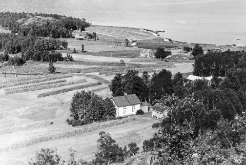 Kvalnes gård 1955