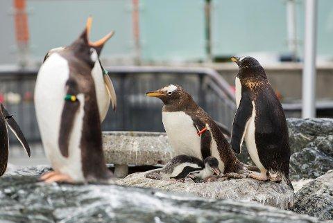 Dyrene blir skremt av de pågående fuglene, ifølge det ansatte på Akvariet.