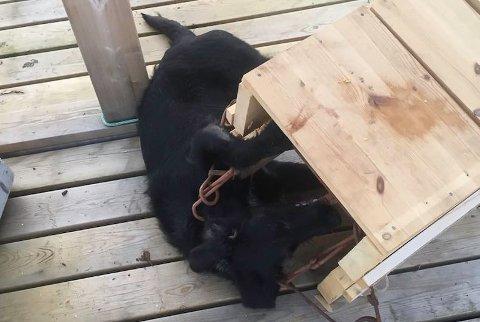 Lykke drept i minkfelle