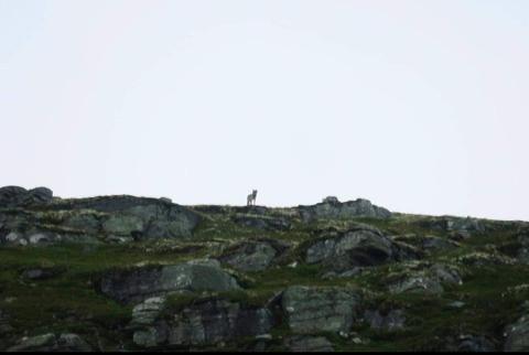 Her har jegere i skadefellingslaget i Sør-Fron fanget ulven med kamera i området Vuludalen. Jakten på ulven fortsetter i dag.