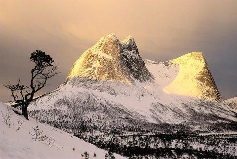 Tenk å være et tre å ha en så flott utsikt hver dag. Foto: Magnus Reneflot