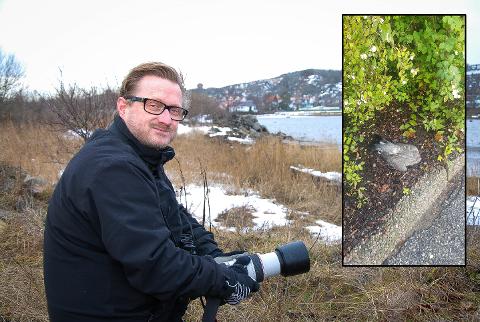 RART: Leder i Naturvernforbundet i Larvik, Anders Faugstad Mæland, har sett lignende tilfeller i Oslo.