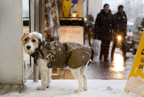 ULOVLIG: Det er faktisk ikke lov å binde en hund utenfor en butikk. Hunden på bildet er for øvrig ikke lokal og har følgelig ikke noe med artikkelen å gjøre.