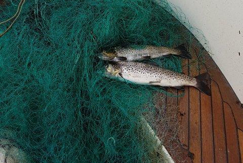 Det er strammet betydelig inn på hva som er tillatt av fiske i elvemunningene.