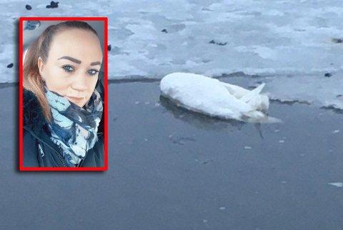 EKKELT: Linn Miriam Nilssen Kvam oppdaget svanen da hun gikk tur på Jarlsø.