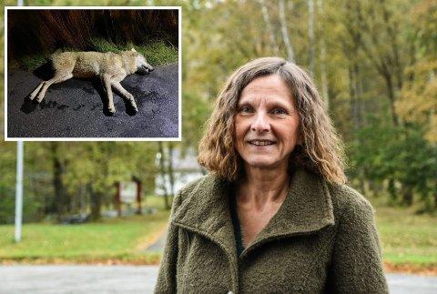 TIL LUND: Ordfører Magnhild Eia (Sp) mener ulven bør utstilles i Lund.