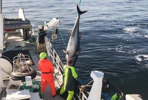 Vibeke Helene frå Gulen tok 24 makrellstørjer vest av Batalden tysdag 24. september.