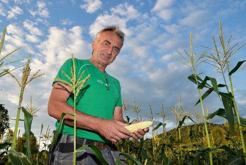 Snart starter selvplukkingen: Om varmen holder begynner maisplukkingen på fredag, sier Karl Halvor Langerud.