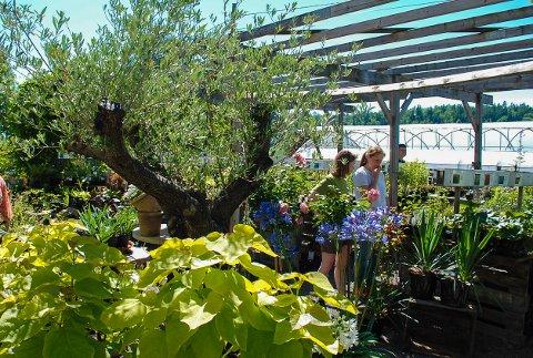 HAGEDAG: Vegge gård arrangerer hagedag hvert år.