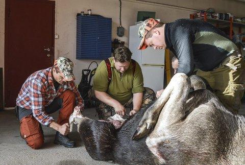 FLÅS: Det å flå elgen uten å ødelegge kjøttet er en viktig jobb. Her er jaktleder Karl Martin Kollerød, Bjørn Skjønhaug og Karl Henrik Skinstad Berke i aksjon.