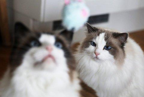 MOLLY OG MARIUS: Kattene til Anne Grete Langeland har 95.000 følgere på Facebook.
