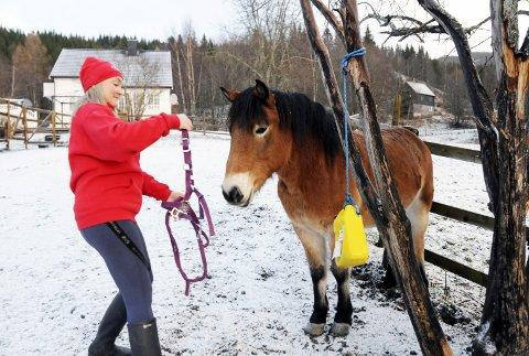 KLAR TIL INNSATS: Tir (16) er en av hestene som tradisjon tro skal tilby ungene rideturer i Mosjøen sentrum. Grima kommer på uten den minste motstand.