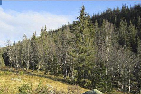 KOMMUNAL STØTTE: Til blant annet miljøtiltak i skogbruket. arkivfoto