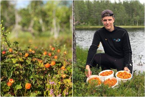 I BØTTER OG SPANN: Markus Nordraak vet å finne de beste stedene å plukke moltebær i åsene ved Randsfjorden. – Det har vært en eventyrlig god moltesommer, forteller han.